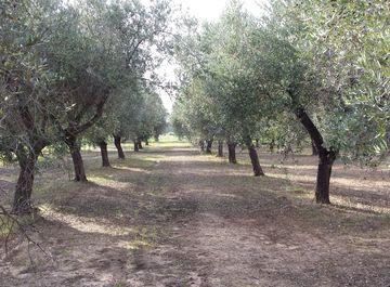 Terreno agricolo a Matino su Casa.it