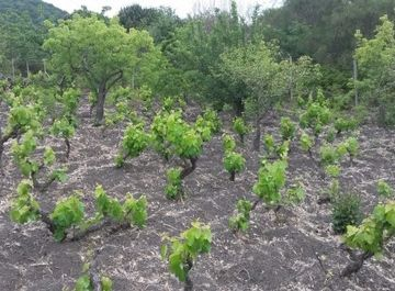 Terreno agricolo a Nicolosi su Casa.it