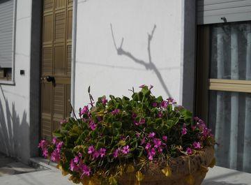 Appartamento a Bacoli su Casa.it